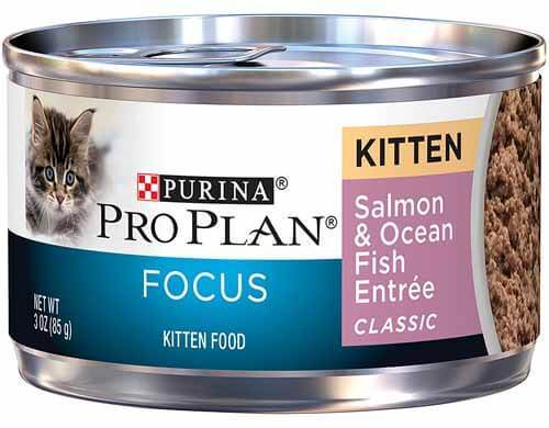 good kitten food