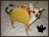 DIY Halloween Costumes for Your Pup