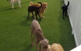 The Pet Doctor Doggie Daycare & Boarding Facility