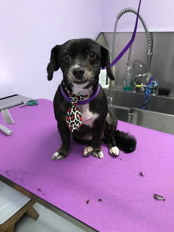 The Pet Doctor Grooming & Spa Services