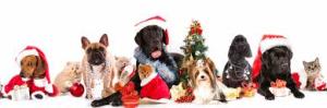 Holiday Food & Pets