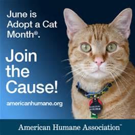 American Humane Association Cat Adoption