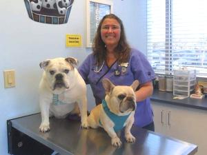 Veterinarian, Dr. Stephanie Fotorny - The Pet Doctor