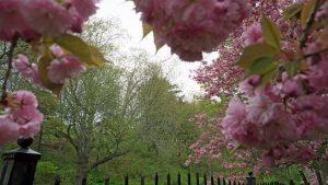 Leighton Dillman Park Blossoms