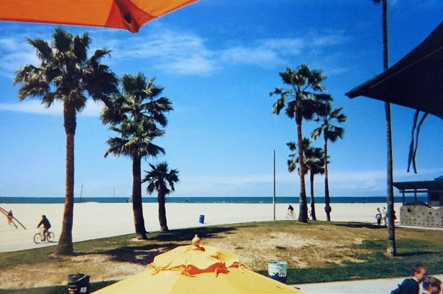 Palm Trees on Ventura Beach
