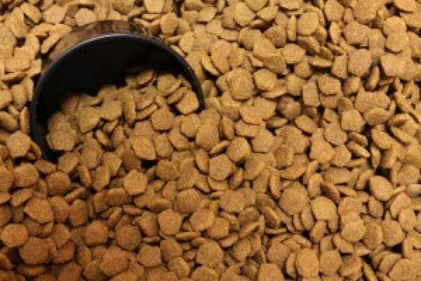 pet food dog food