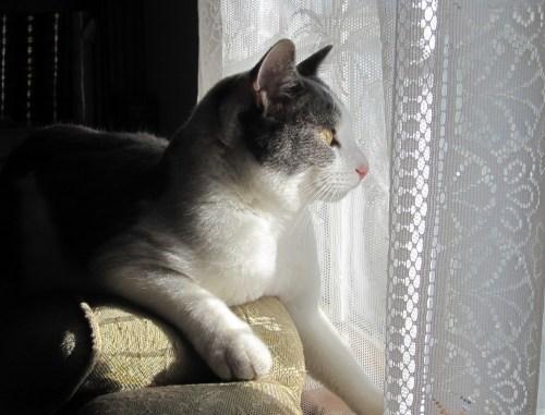 cat behavior perch watching bird