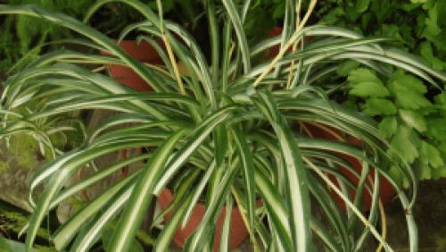 safe plant for dog
