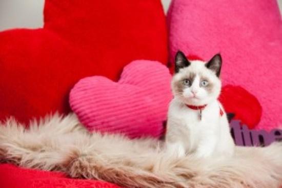 cat heart health
