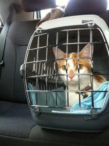 cat carrier car