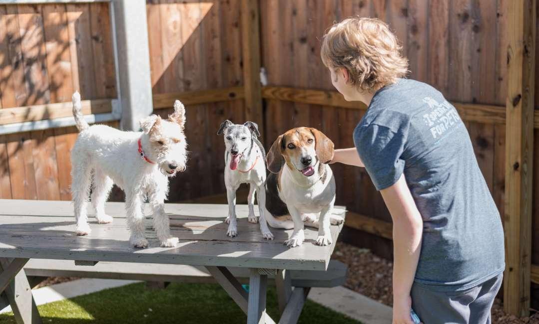 Lakeland doggie daycare