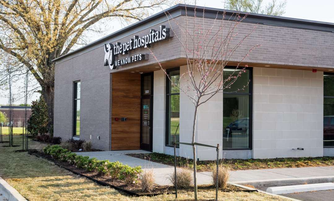 Expert Veterinary Care In Lakeland The Pet Hospitals