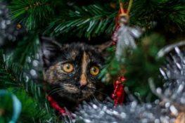 cat-tinsel
