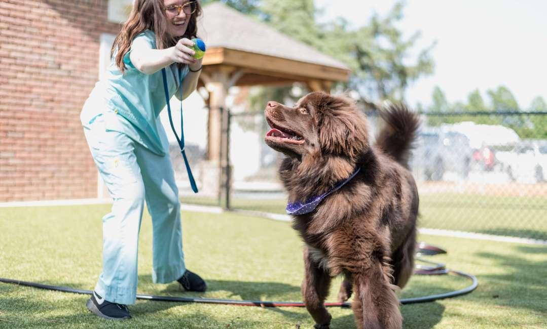 Newfoundland Doggie Daycare