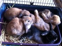 4 babies snuggling with Oranje mama
