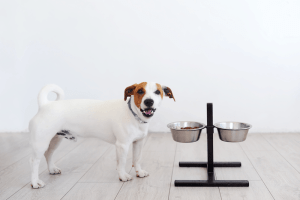 Best High Fiber Dog Food-Anal Gland Problems