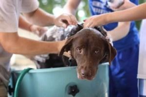 Can I use baby shampoo on my dog