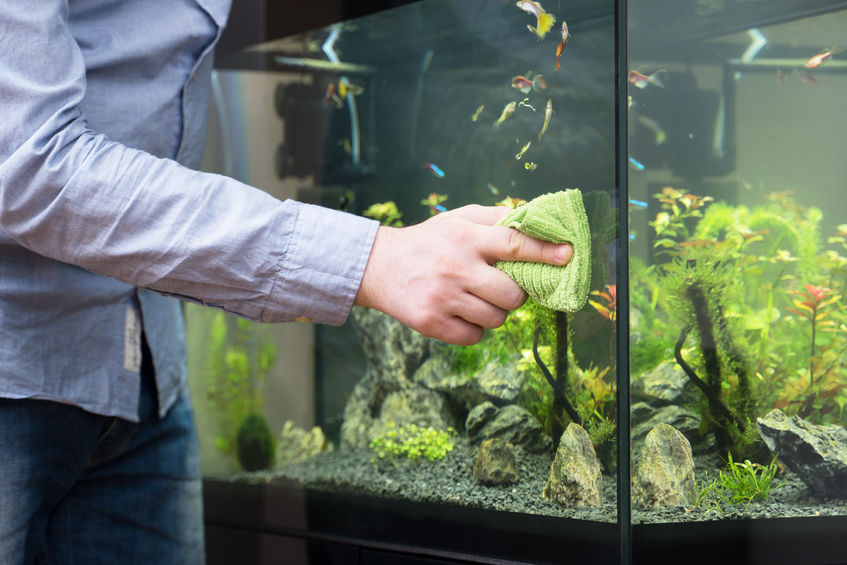 How To Deal With Smelly Water In Your Aquarium? - ThePetMaster