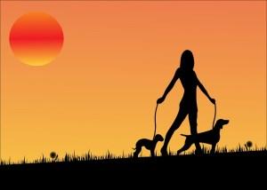 sunset-163479_960_720