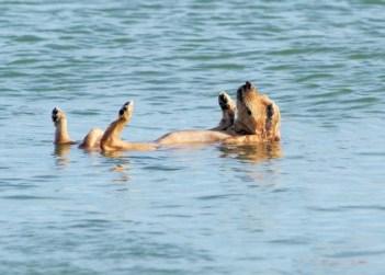 dog floating