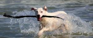 dog with seaweed