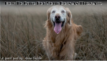 Caring for dogs as they age