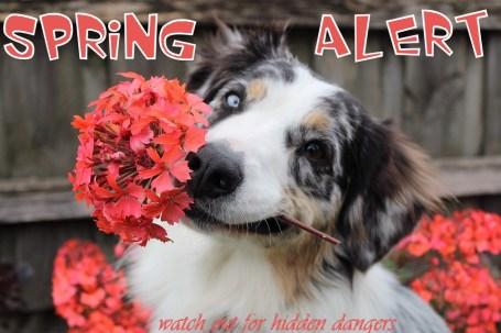 spring pet alert