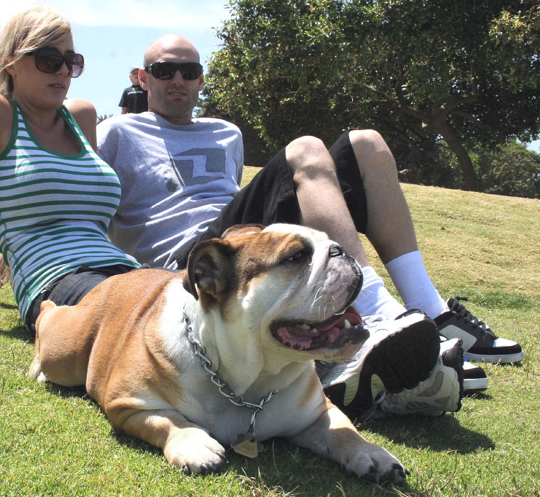 Popular Australia Chubby Adorable Dog - Family_pet  Pictures_936227  .jpg