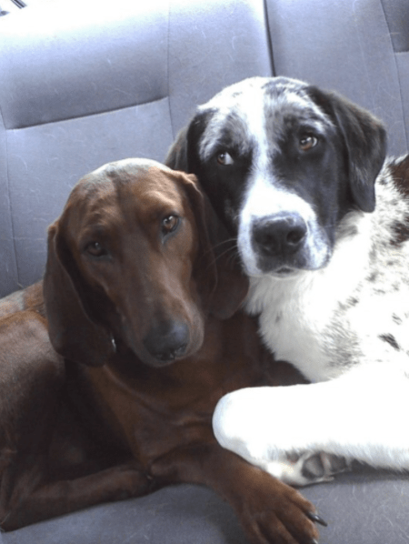 Best friends adopted together