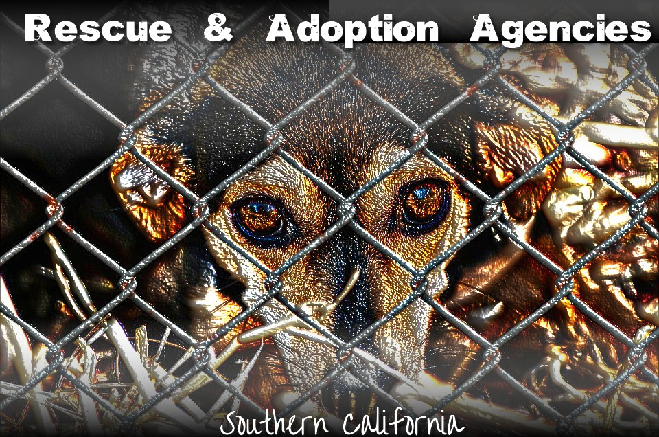 So Cal Rescue & Adoption Agencies