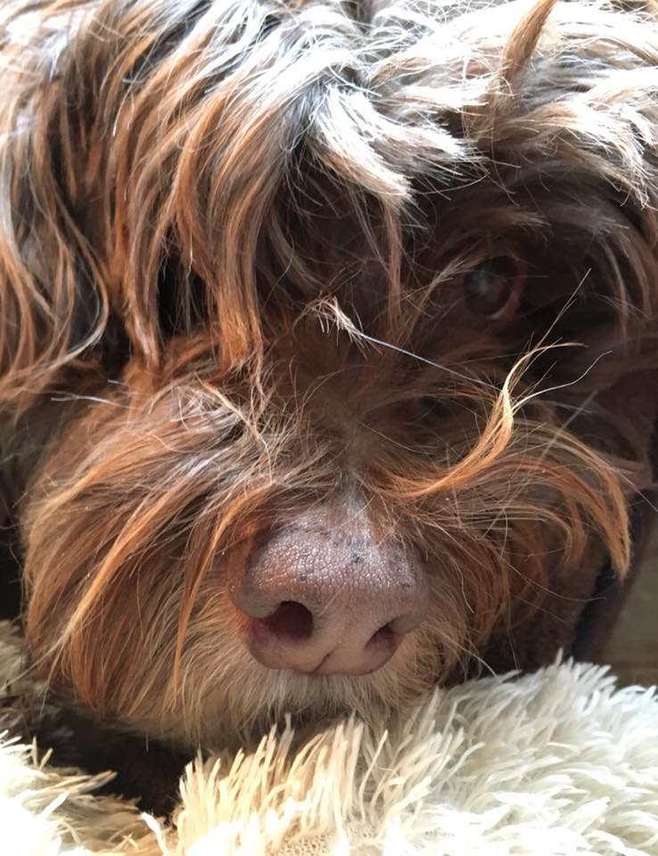 Bashi's Pup