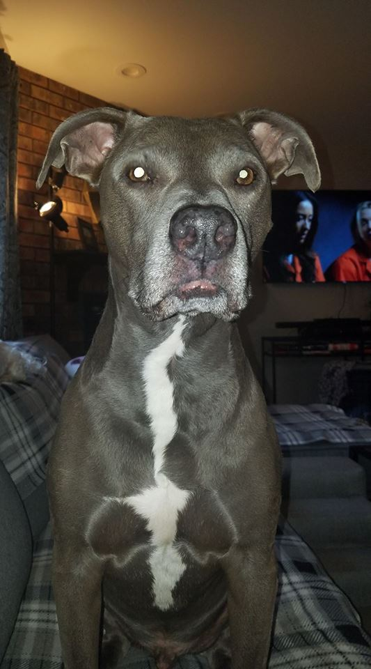 kelly's pup
