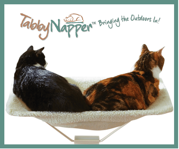 Tabby Napper