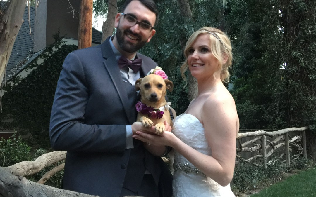 Should Your Dog Be In Your Wedding?