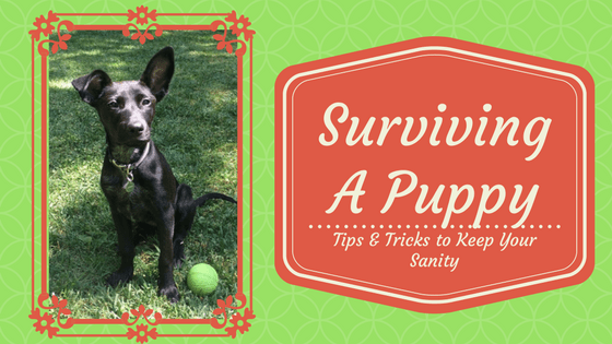 Surviving A Puppy