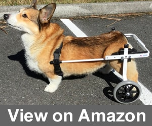 wheelchair dog aluminum kitchen chairs 10 best to buy in february 2019 buyer s guide k9 carts rear support review