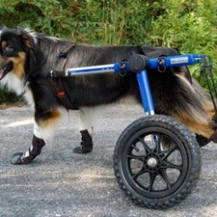 Wheel Chairs For Dogs Half Back Chair Covers Sale 10 Best Dog Wheelchair To Buy In February 2019 Buyer S Guide Review
