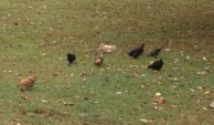 The teeny bopper chicks! They are so cute!!