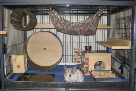 How to Prepare Your Home for a Chinchilla