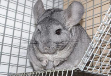 Reviews of the Best Chinchilla Cages