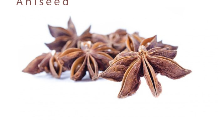 Aniseed - Pharmacognosy