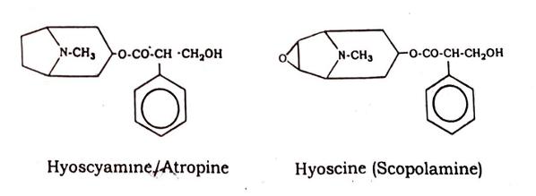 Datura Stramonium Chemical Constituents