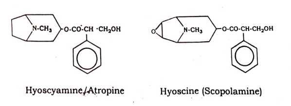 Herbs - Datura Stramonium - The Pharmacognosy