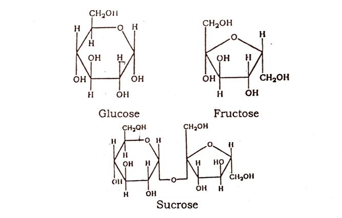 Phytochemistry of Plants Drugs