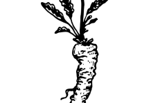 Roots in Pharmacognosy