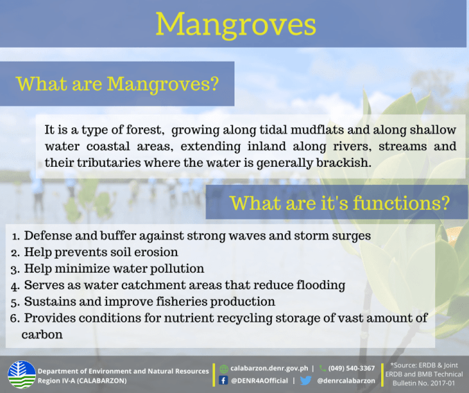 importance of mangroves in the philippines