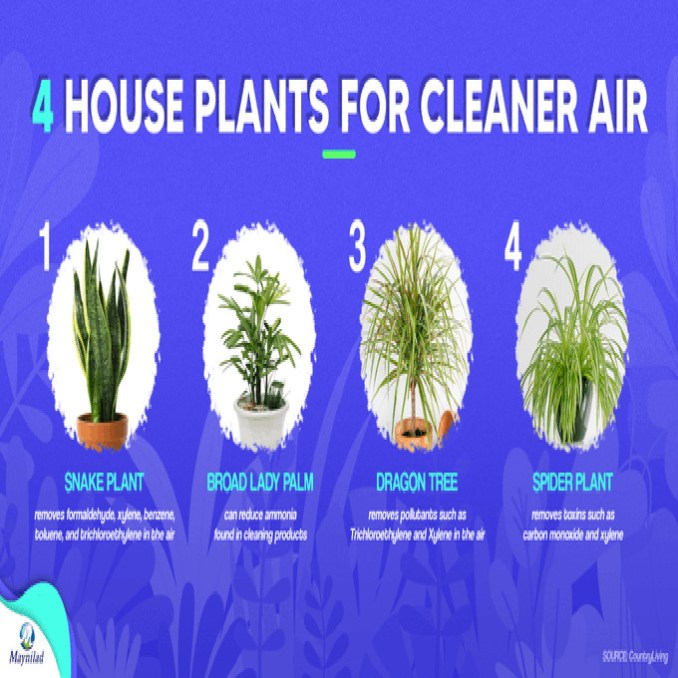 house plants for cleaner air