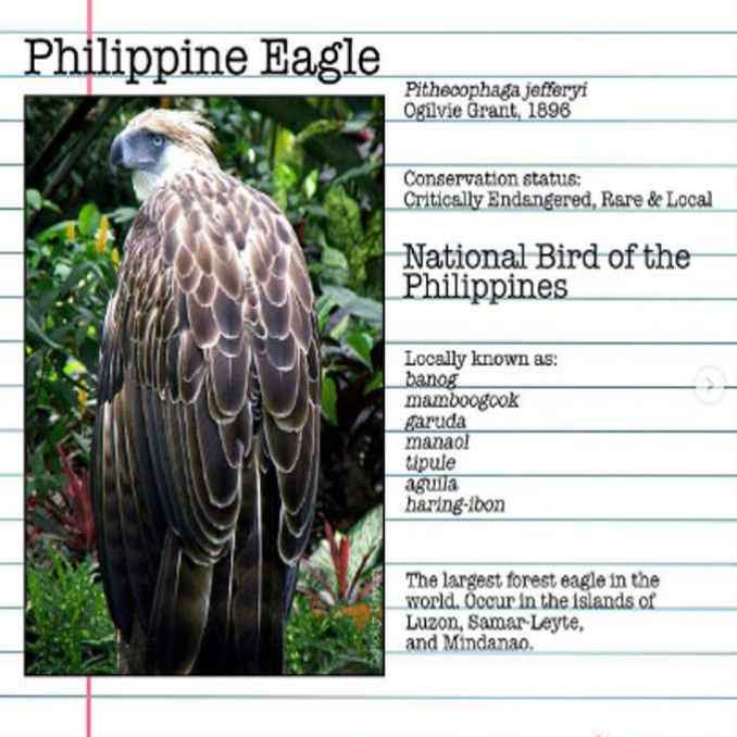 national bird of the philippines