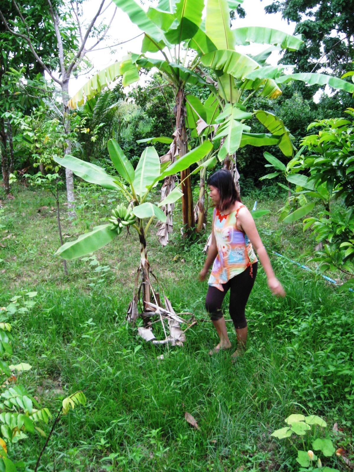 Mak's wife hand picks my banana tree