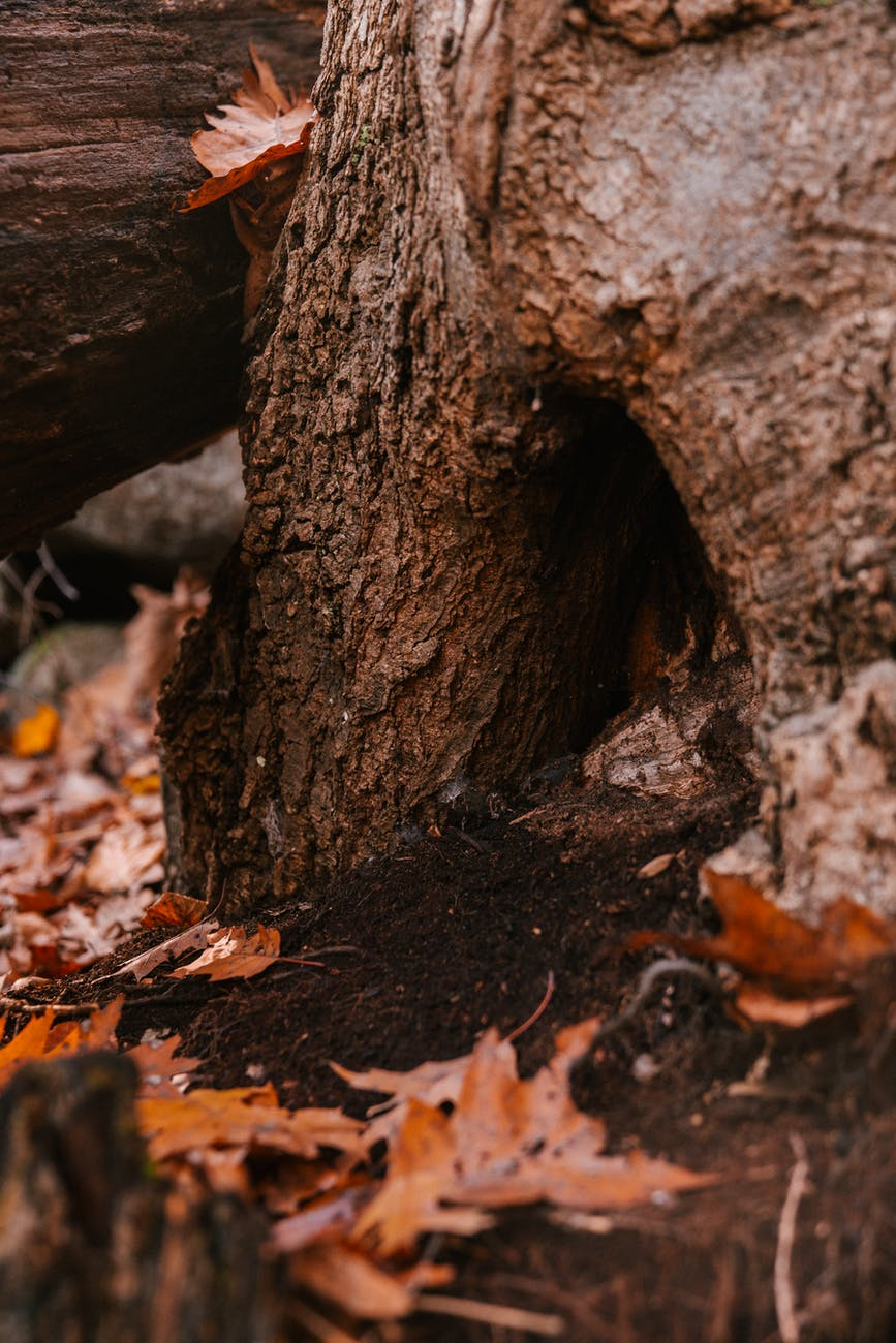 tree trunk with burrow in autumn woods
